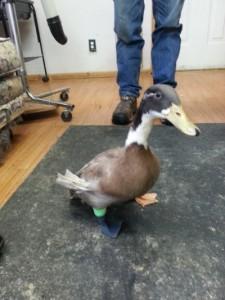 3d duck leg